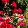 Парковая романтика (Умань+Александрия)